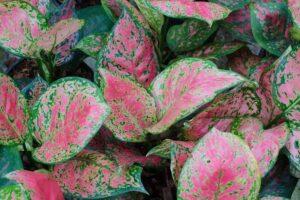 فواید گیاهان خانگی